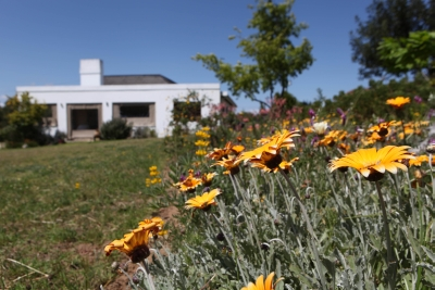 Daisy flowers and view of house