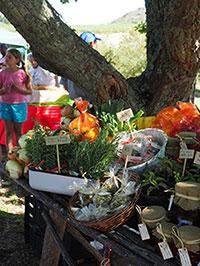 ksv Farmers market Organic produce on display.